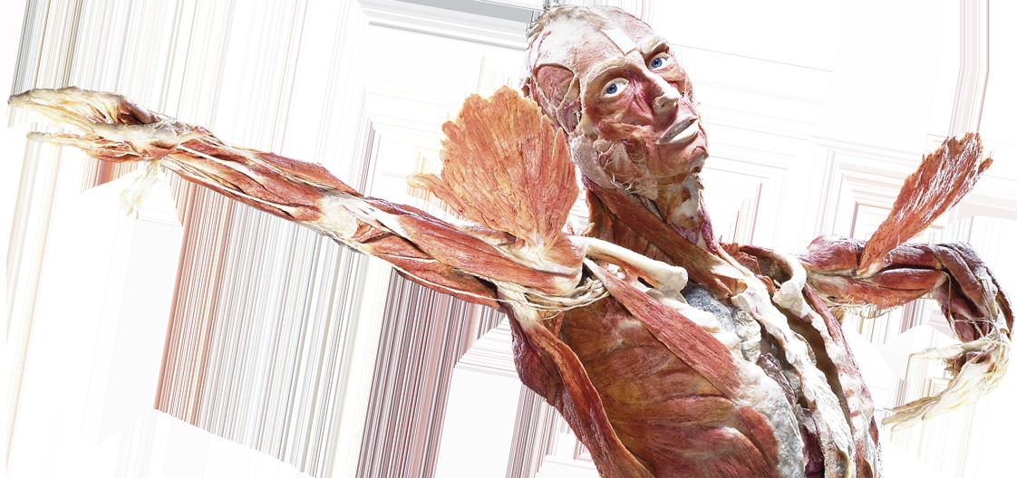 Anatomie quiz!