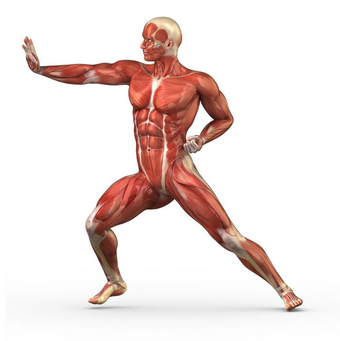 Anatomy course refresher
